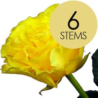 6 Classic Yellow Roses