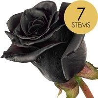 7 Classic Black Roses