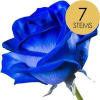 7 Classic Blue Roses