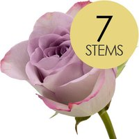 7 Classic Lilac Roses