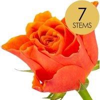 7 Classic Orange Roses