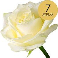 7 Luxury White Roses