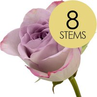 8 Classic Lilac Roses