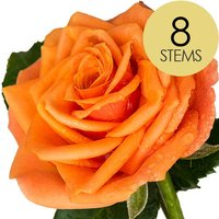8 Luxury Orange Roses