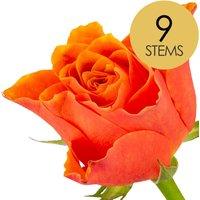 9 Classic Orange Roses
