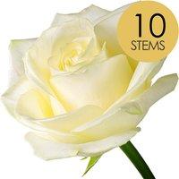 10 Classic White Roses
