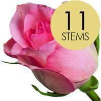 11 Classic Pink Roses