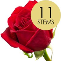 11 Classic Bright Red Freedom Roses