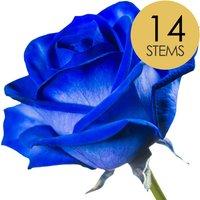 14 Classic Blue Roses