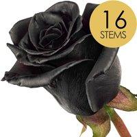 16 Classic Black Roses