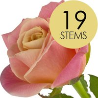 19 Classic Peach Roses