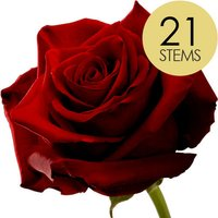 21 Classic Large Headed Red Naomi Roses