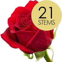 21 Classic Bright Red Freedom Roses