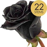 22 Classic Black Roses