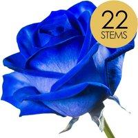 22 Classic Blue Roses