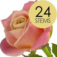 24 Classic Peach Roses