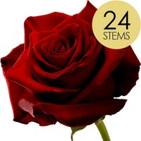 24 Classic Large Headed Red Naomi Roses