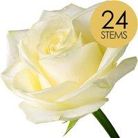24 Luxury White Roses