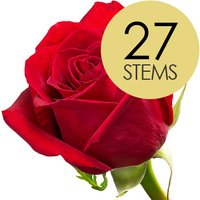 27 Classic Bright Red Freedom Roses