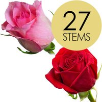 27 Classic Red and Pink Roses