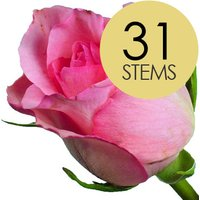 31 Classic Pink Roses