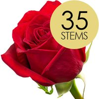 35 Classic Bright Red Freedom Roses