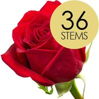 36 Classic Bright Red Freedom Roses