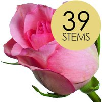 39 Classic Pink Roses
