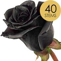 40 Classic Black Roses