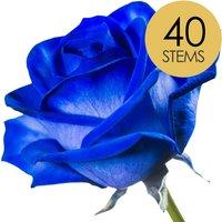 40 Classic Blue Roses