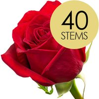 40 Classic Bright Red Freedom Roses