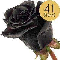 41 Classic Black Roses