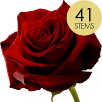 41 Classic Large Headed Red Naomi Roses