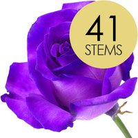 41 Luxury Purple Roses