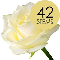 42 Classic White Roses