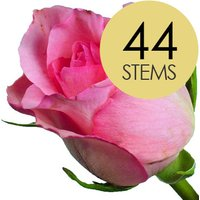 44 Classic Pink Roses