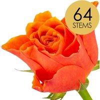 64 Classic Orange Roses