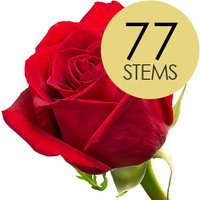 77 Classic Bright Red Freedom Roses