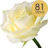81 Classic White Roses