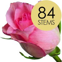 84 Classic Pink Roses