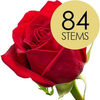 84 Classic Bright Red Freedom Roses