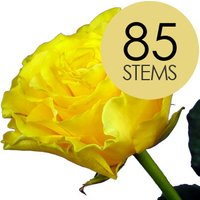 85 Classic Yellow Roses