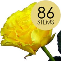 86 Classic Yellow Roses