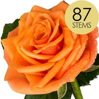87 Classic Orange Roses