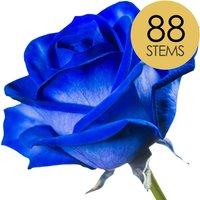 88 Classic Blue Roses