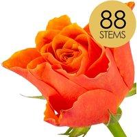 88 Classic Orange Roses