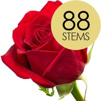 88 Classic Bright Red Freedom Roses