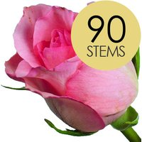 90 Classic Pink Roses