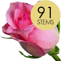 91 Classic Pink Roses