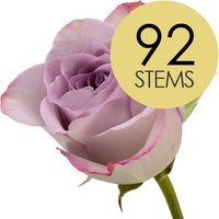 92 Classic Lilac Roses